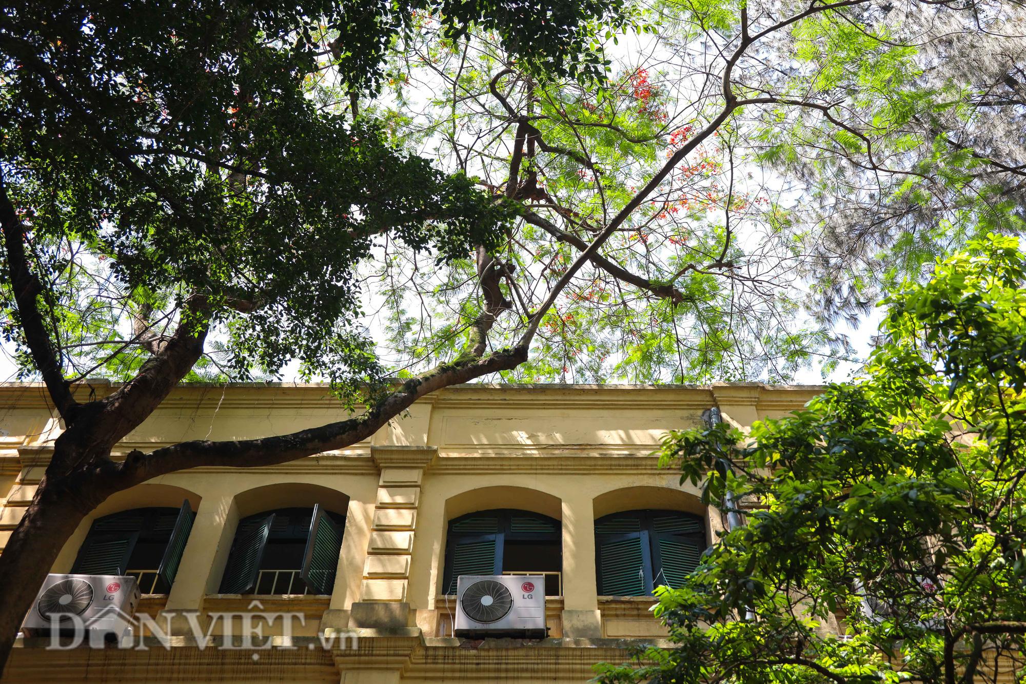 Học sinh Hà Nội không hề lo sợ dù ngồi giữa sân trường đầy cây cổ thụ - Ảnh 12.