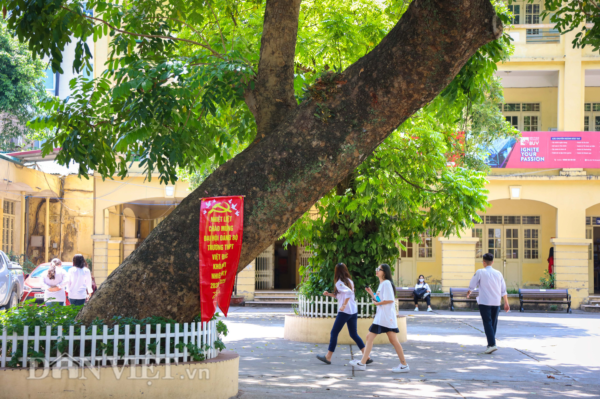 Học sinh Hà Nội không hề lo sợ dù ngồi giữa sân trường đầy cây cổ thụ - Ảnh 13.
