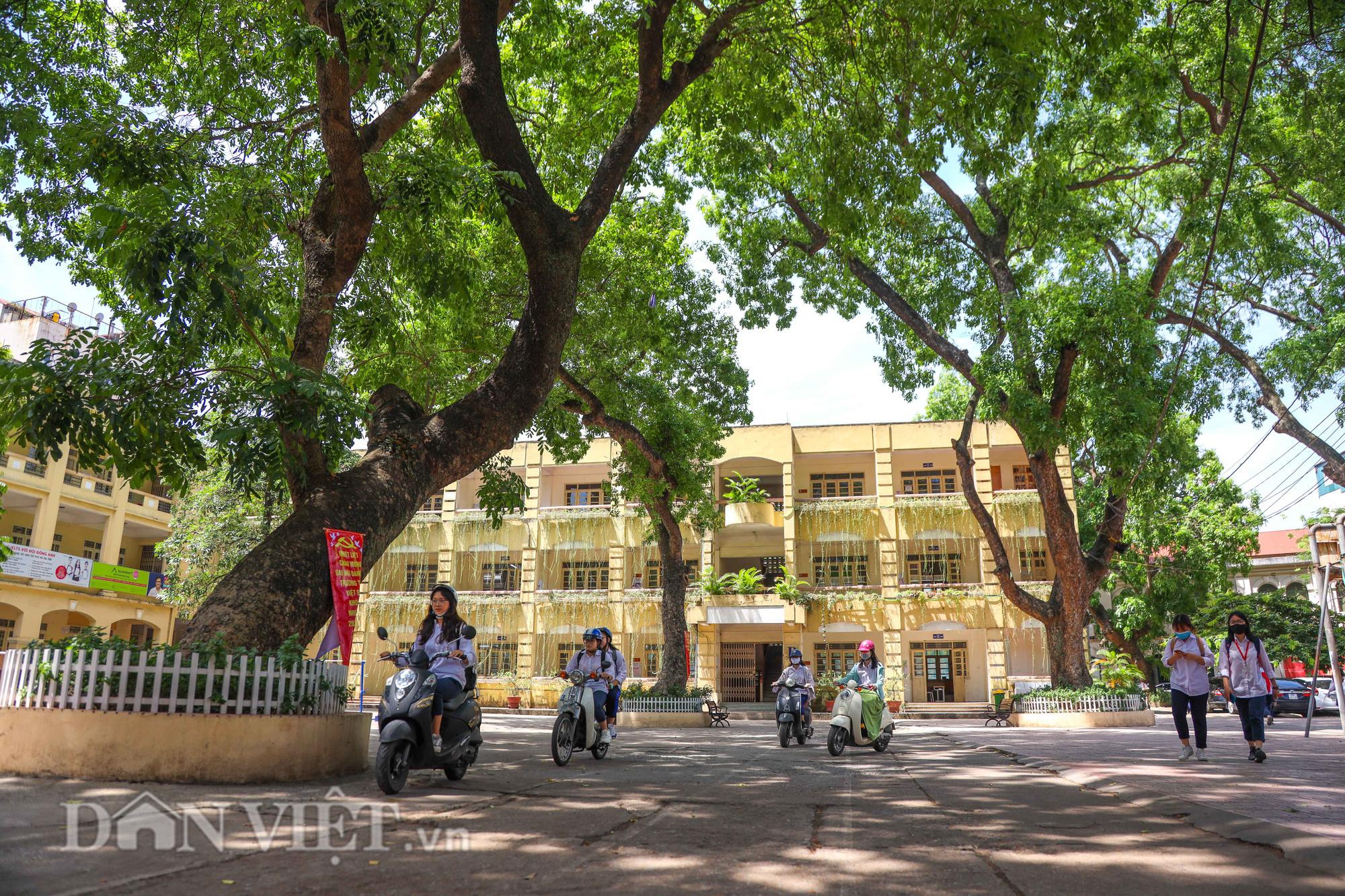 Học sinh Hà Nội không hề lo sợ dù ngồi giữa sân trường đầy cây cổ thụ - Ảnh 14.