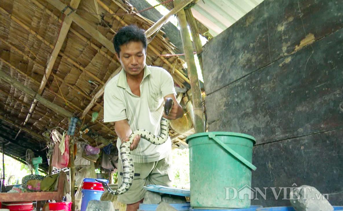 Nuôi rắn trong can nhựa, nông dân Hậu Giang thu lãi đậm mỗi năm - Ảnh 3.