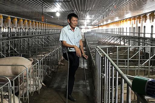 Sơn La: Một nông dân thu gần 5 tỷ đồng chỉ riêng xuất bán 1 lứa lợn
