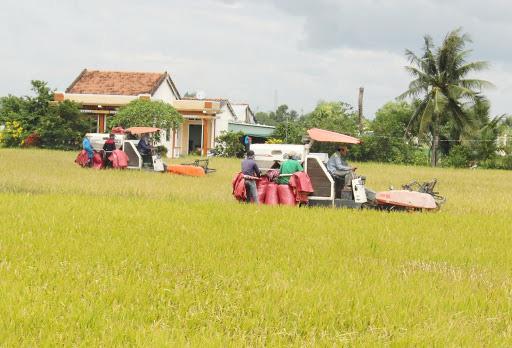 Sau lùm xùm điều hành xuất khẩu gạo, giá gạo lên đỉnh cao nhất trong 2 năm - Ảnh 2.
