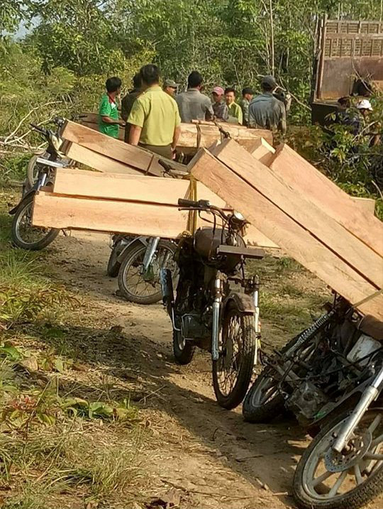 """Không khởi tố vụ mất 550 ha rừng vì """"không xác định được thiệt hại"""" - Ảnh 2."""
