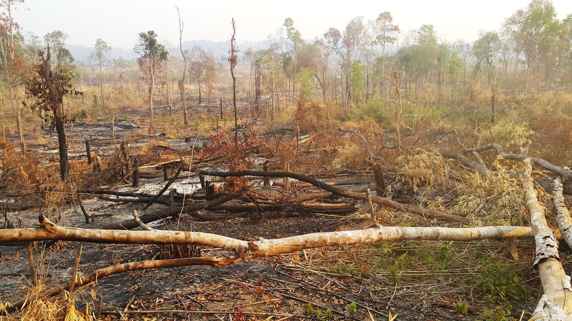"""Không khởi tố vụ mất 550 ha rừng vì """"không xác định được thiệt hại"""" - Ảnh 1."""
