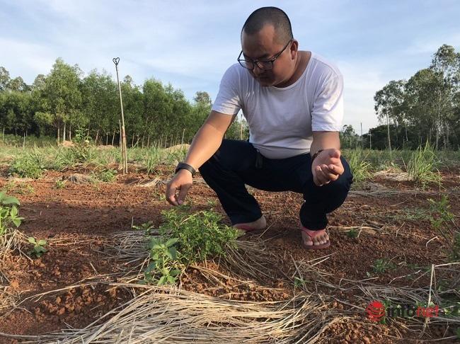 """""""Hô biến"""" sọ chó - loài cây mọc hoang thành đặc sản, 9X Quảng Ngãi bán gần triệu đồng mỗi kg - Ảnh 2."""