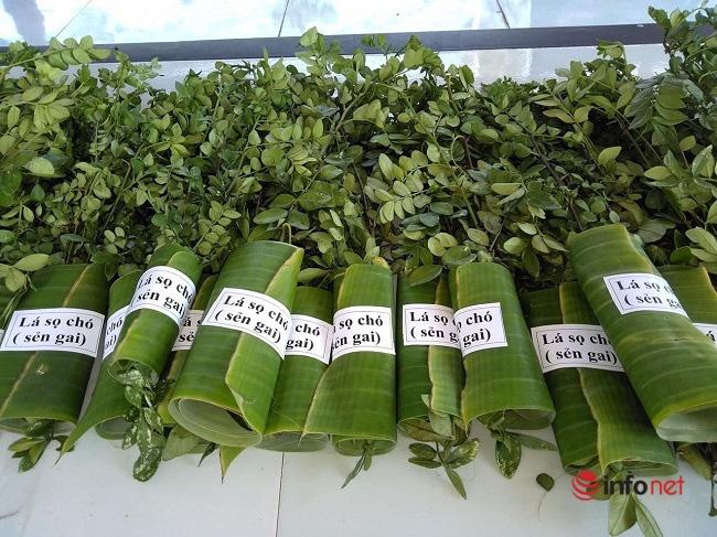 """""""Hô biến"""" sọ chó - loài cây mọc hoang thành đặc sản, 9X Quảng Ngãi bán gần triệu đồng mỗi kg - Ảnh 4."""