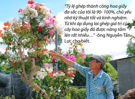 """Đồng Tháp: """"Phù phép"""" 1 cây hoa giấy ra hoa nhiều màu, dân chơi kiểng """"phát sốt"""" - Ảnh 2."""