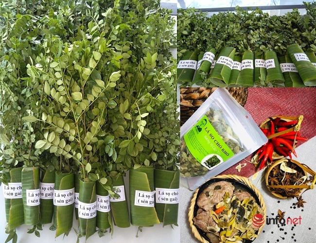 """""""Hô biến"""" sọ chó - loài cây mọc hoang thành đặc sản, 9X Quảng Ngãi bán gần triệu đồng mỗi kg - Ảnh 6."""