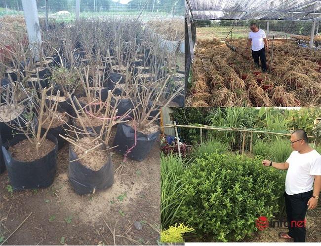 """""""Hô biến"""" sọ chó - loài cây mọc hoang thành đặc sản, 9X Quảng Ngãi bán gần triệu đồng mỗi kg - Ảnh 1."""