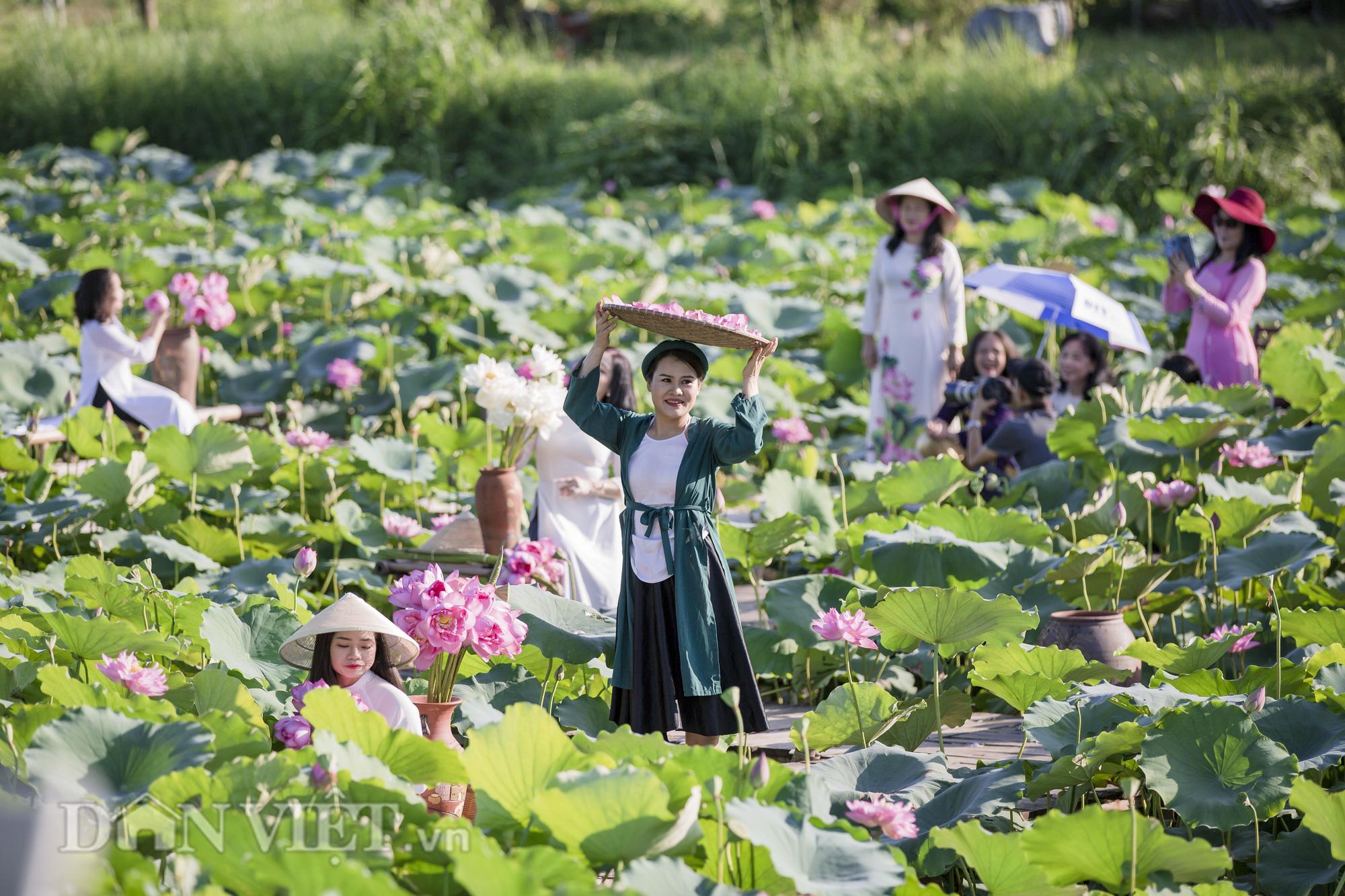 """Sen Hồ Tây bung nở, người dân Hà Thành đổ xô tới """"khoe sắc"""" - Ảnh 6."""