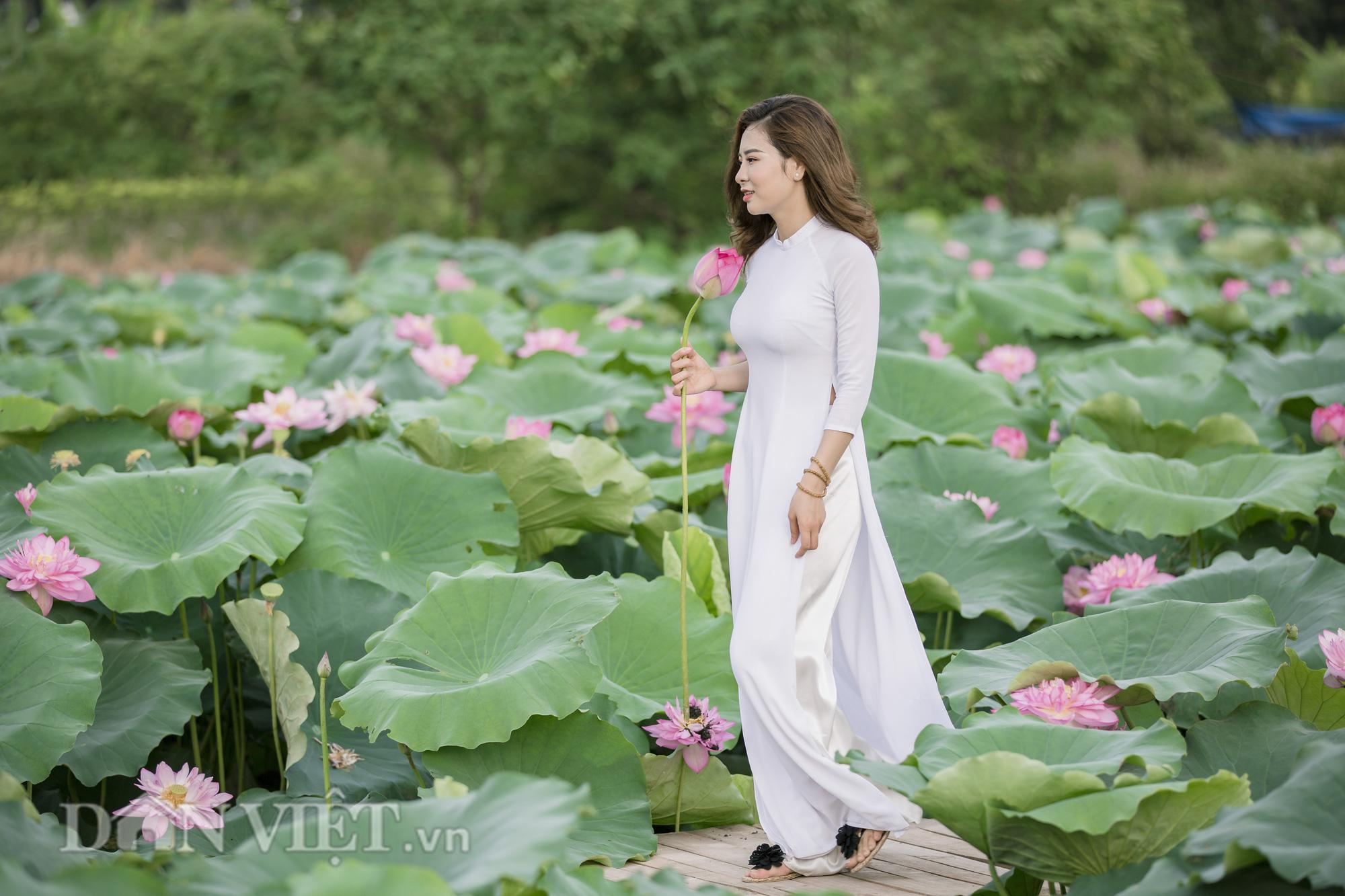 """Sen Hồ Tây bung nở, người dân Hà Thành đổ xô tới """"khoe sắc"""" - Ảnh 8."""