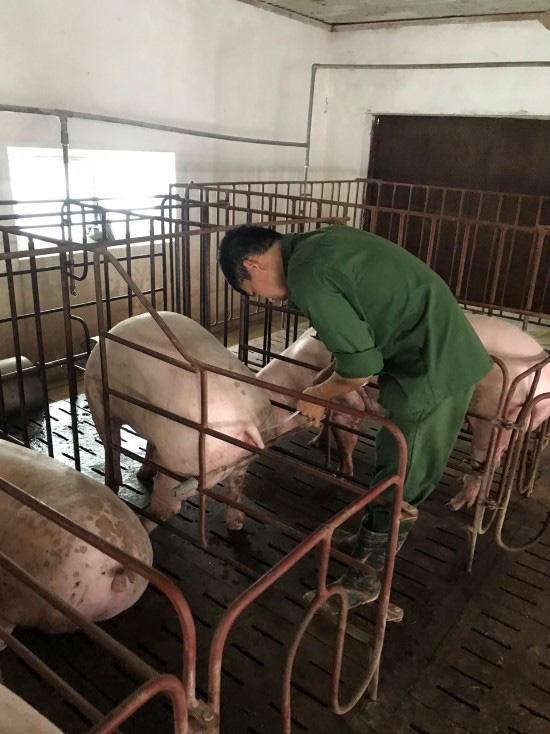 """Giá heo hơi hôm nay 20/6: Nuôi lợn """"3 sạch"""", tháng nào cũng bán 9-10 tấn, thu lãi nửa tỷ đồng - Ảnh 2."""