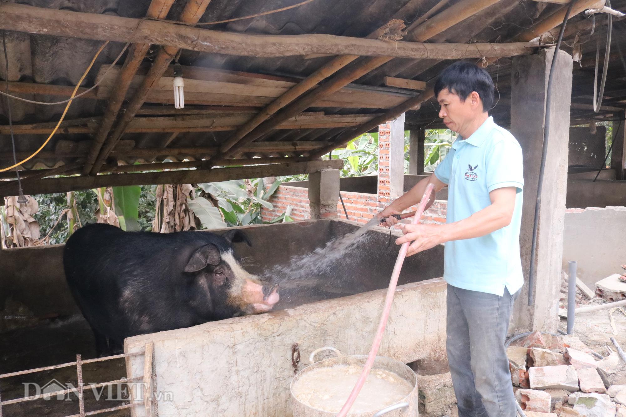 """""""Bỏ túi"""" hơn triệu mỗi năm từ nuôi lợn - Ảnh 2."""