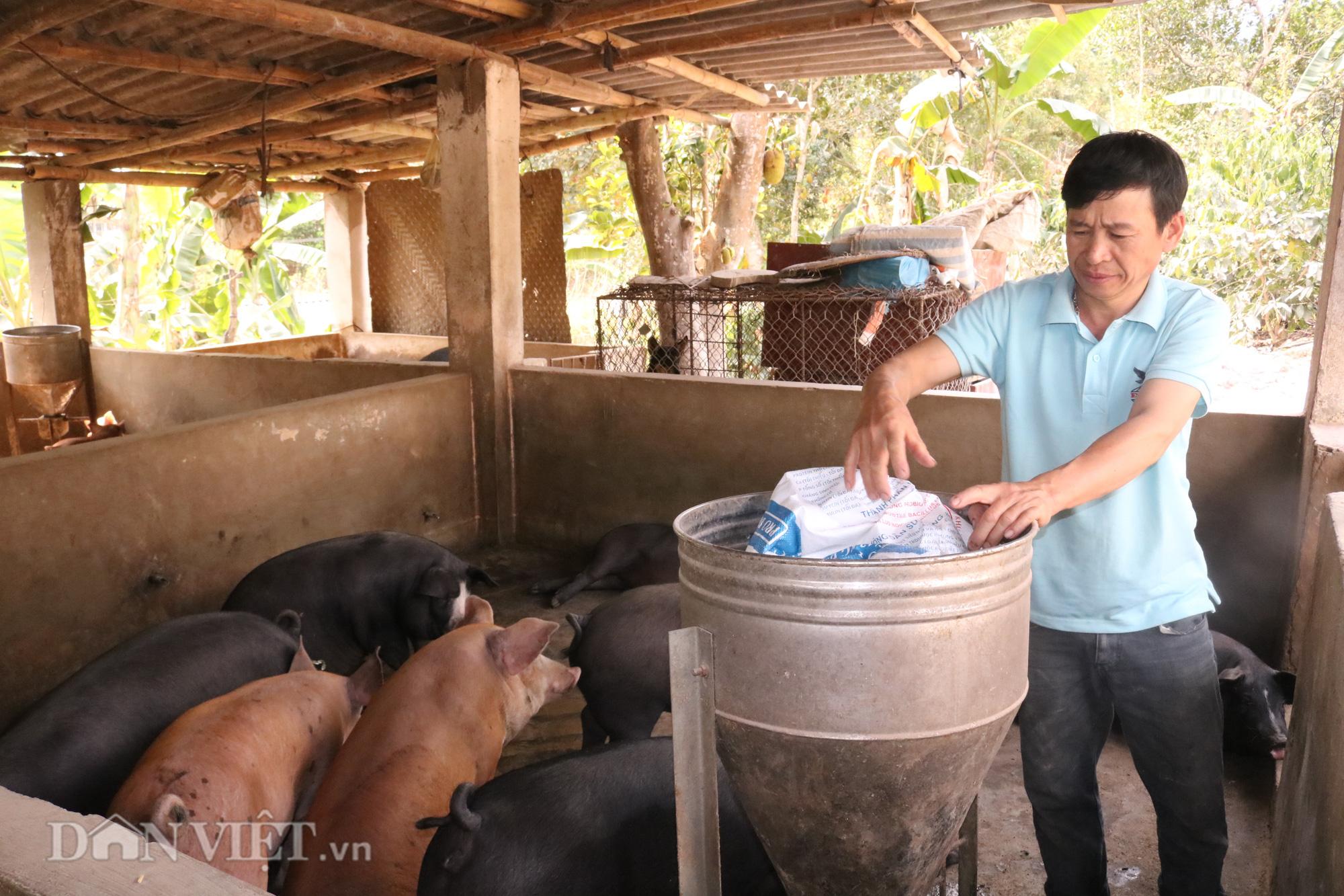 """""""Bỏ túi"""" hơn triệu mỗi năm từ nuôi lợn - Ảnh 1."""