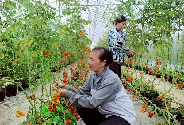Nhịp cầu nhà nông giúp nông dân nuôi, trồng hiệu quả - Ảnh 1.