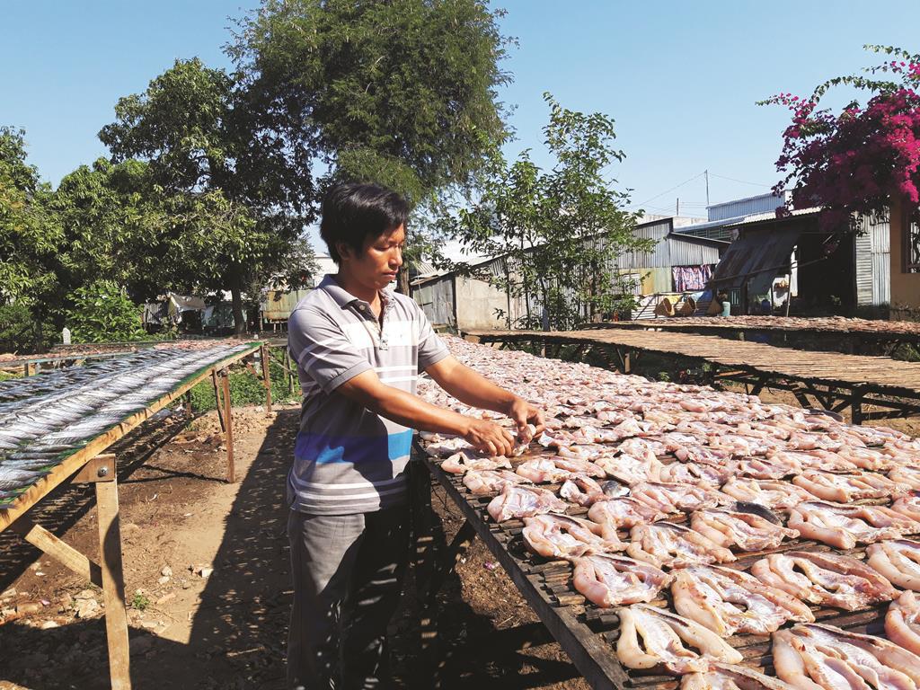 Làm giàu từ nghề chế biến cá khô - Ảnh 1.