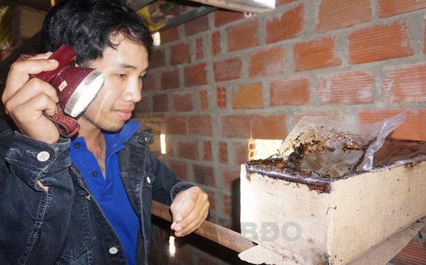 """Bình Định: """"Rước"""" loài ong bé như con muỗi vào nhà nuôi, chảy ra thứ mật quý hiếm, nhà khoa học tìm đến xem - Ảnh 1."""