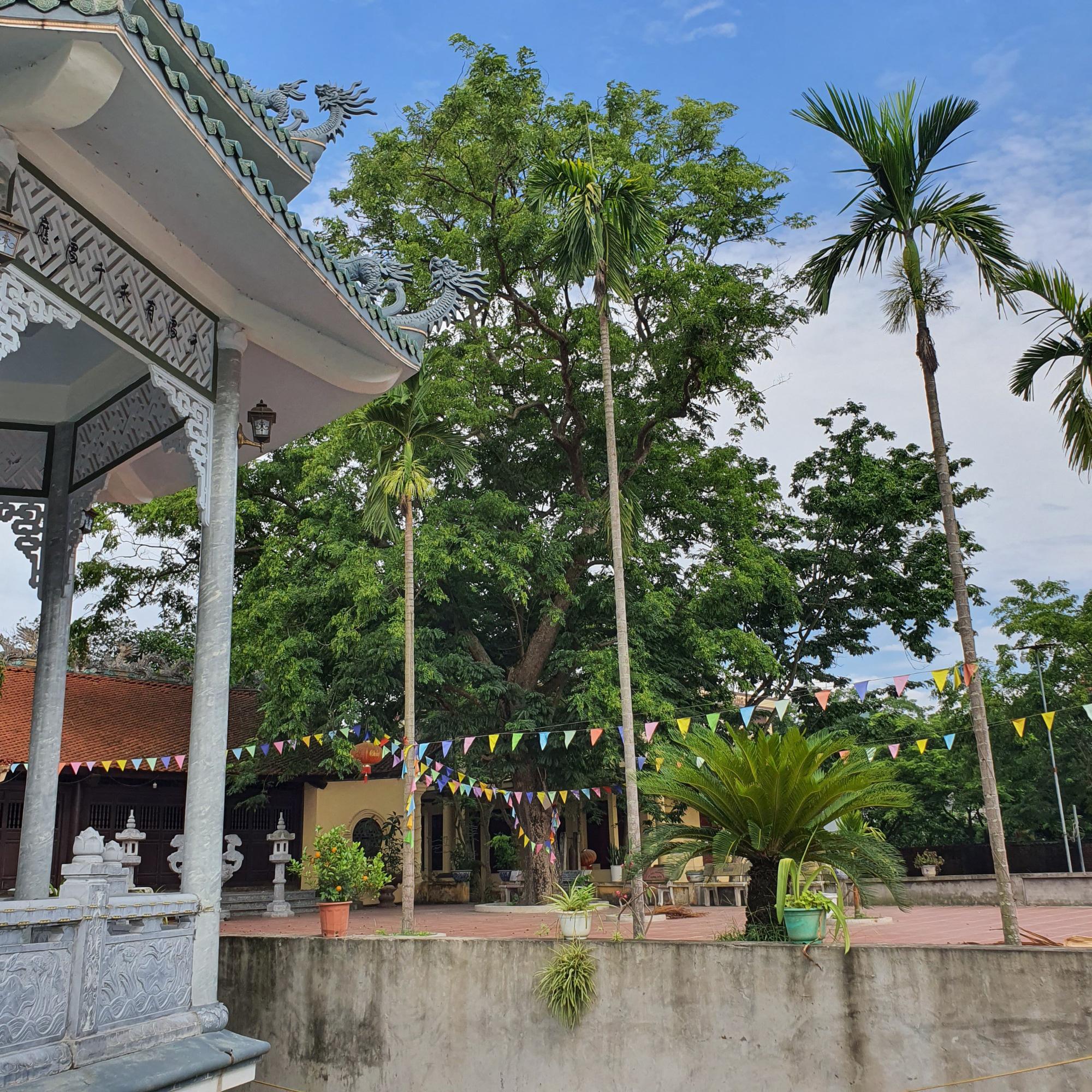 Sau 2 năm, làng Đông Cốc lại xôn xao phi vụ bán thêm 1 cây sưa tiền tỷ - Ảnh 6.