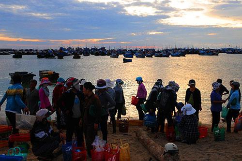 Bình Thuận: Tha hồ ngắm, chọn lựa những con ốc biển tươi ngon và hải sâm lạ mắt ở đảo Phú Quý - Ảnh 2.