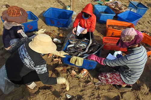 Bình Thuận: Tha hồ ngắm, chọn lựa những con ốc biển tươi ngon và hải sâm lạ mắt ở đảo Phú Quý - Ảnh 3.