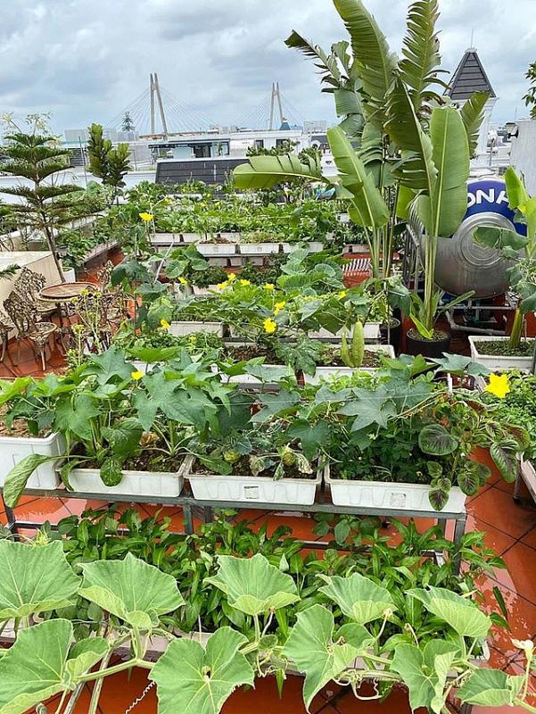 Đủ loại rau, củ và nuôi cá trên sân thượng biệt thự triệu đô của mẹ đảm Hải Phòng - Ảnh 2.
