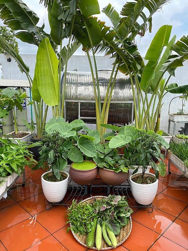 Đủ loại rau, củ và nuôi cá trên sân thượng biệt thự triệu đô của mẹ đảm Hải Phòng - Ảnh 4.