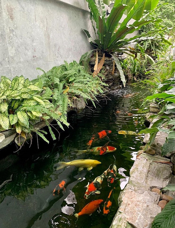 Đủ loại rau, củ và nuôi cá trên sân thượng biệt thự triệu đô của mẹ đảm Hải Phòng - Ảnh 8.