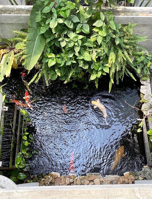 Đủ loại rau, củ và nuôi cá trên sân thượng biệt thự triệu đô của mẹ đảm Hải Phòng - Ảnh 9.