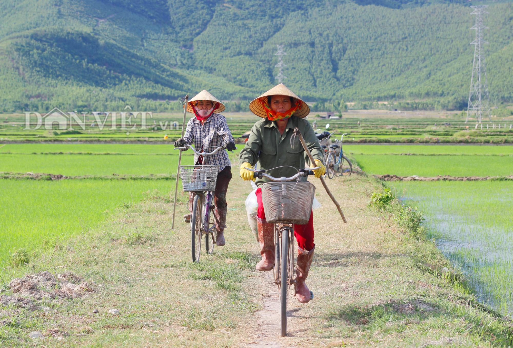 """Quảng Bình: Nông dân vật vã ra đồng dưới cái  nắng """"như đổ lửa""""  - Ảnh 1."""