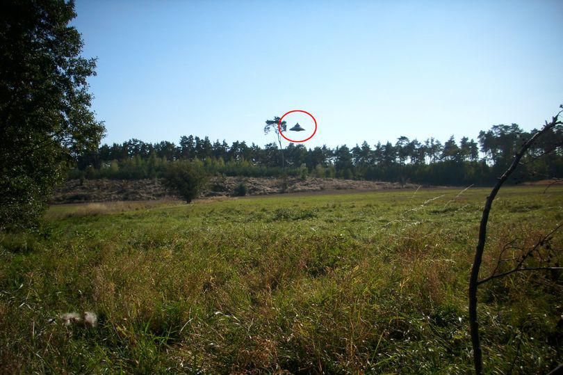 Người đàn ông đang đạp xe thì bất thình lình thấy UFO lơ lửng trên cánh rừng   - Ảnh 1.
