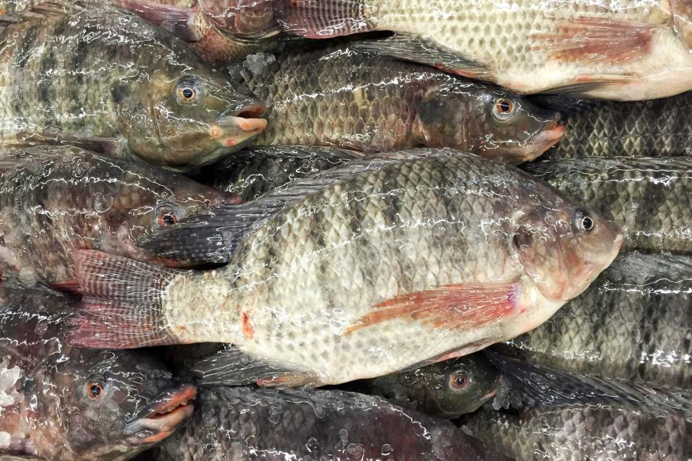 """8 loại cá """"đại bổ"""" giàu chất dinh dưỡng bậc nhất, vừa ngon vừa rẻ có rất nhiều ở Việt Nam - Ảnh 6."""