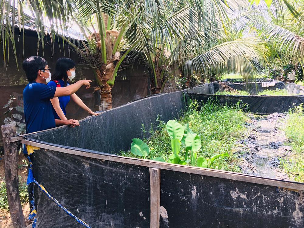 An Giang: Lót bạt trên vườn để nuôi lươn, nông dân bắt cả tấn bán với giá 210 ngàn đồng/ký - Ảnh 1.