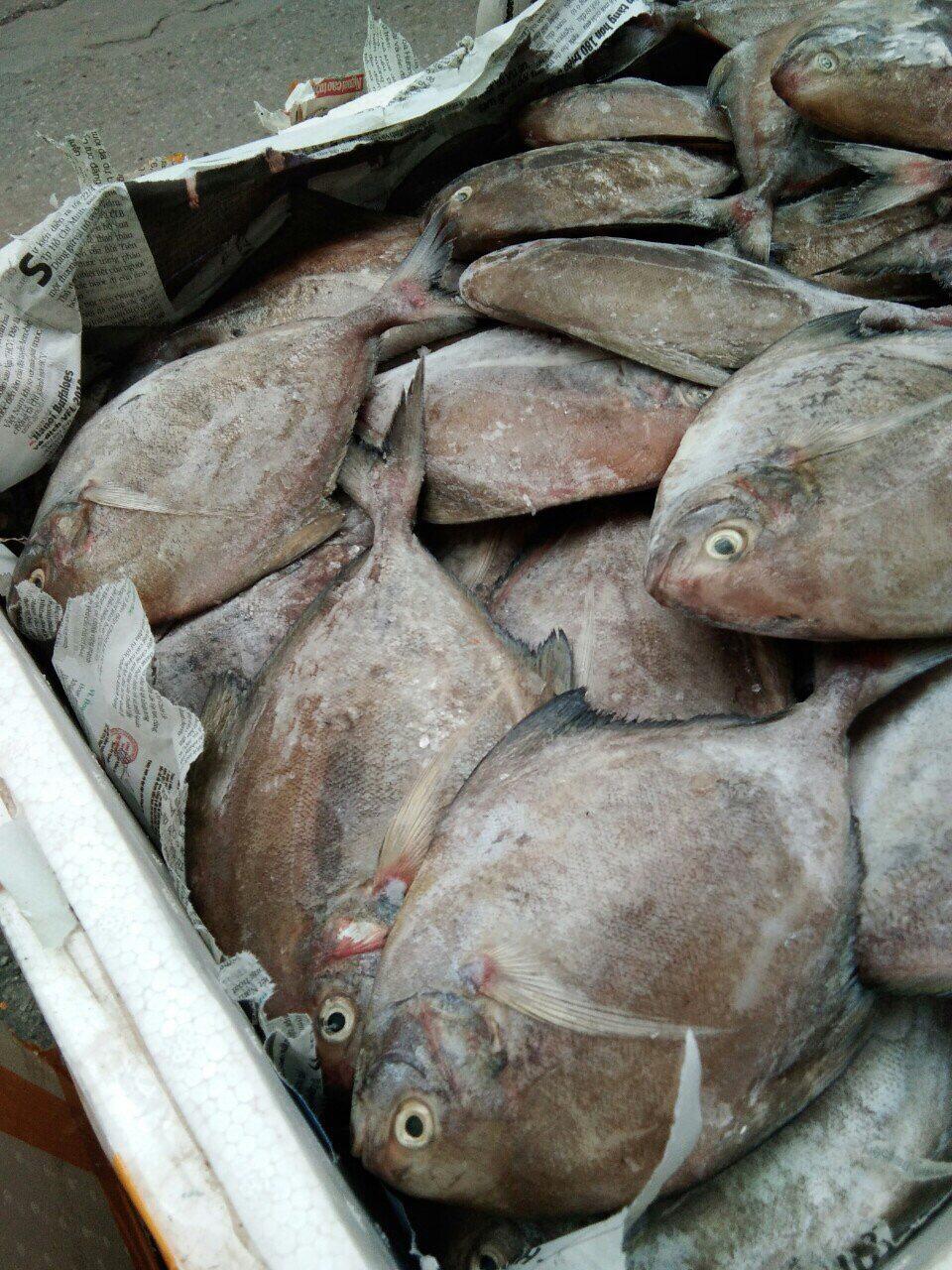 """8 loại cá """"đại bổ"""" giàu chất dinh dưỡng bậc nhất, vừa ngon vừa rẻ có rất nhiều ở Việt Nam - Ảnh 8."""
