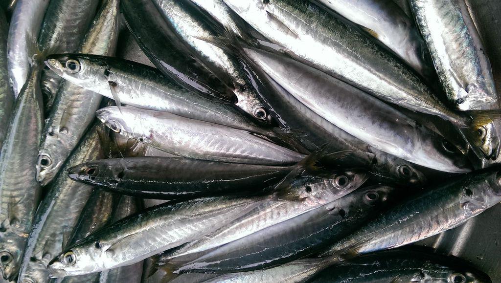 """8 loại cá """"đại bổ"""" giàu chất dinh dưỡng bậc nhất, vừa ngon vừa rẻ có rất nhiều ở Việt Nam - Ảnh 9."""