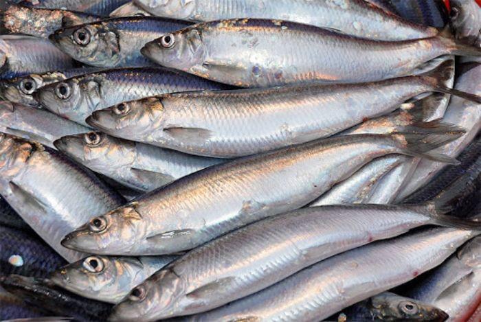 """8 loại cá """"đại bổ"""" giàu chất dinh dưỡng bậc nhất, vừa ngon vừa rẻ có rất nhiều ở Việt Nam - Ảnh 4."""