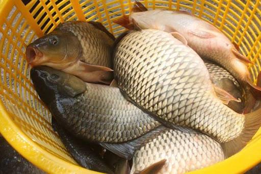 """8 loại cá """"đại bổ"""" giàu chất dinh dưỡng bậc nhất, vừa ngon vừa rẻ có rất nhiều ở Việt Nam - Ảnh 1."""