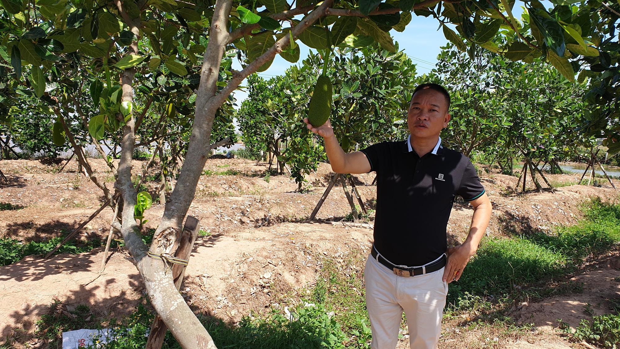 Thái Bình: Đại gia bất động sản bỏ phố về quê ....trồng cỏ, nuôi bò - Ảnh 5.