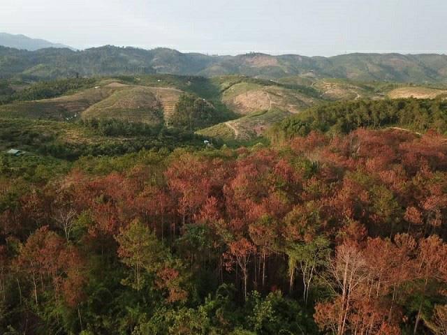 Táo tợn đầu độc 10ha rừng thông, 7 bị cáo lĩnh án - Ảnh 3.