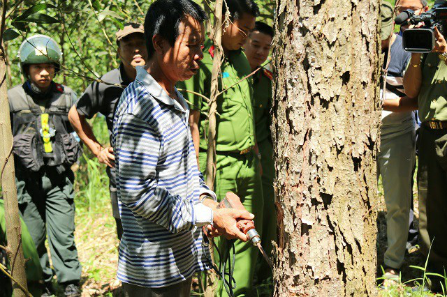 Táo tợn đầu độc 10ha rừng thông, 7 bị cáo lĩnh án - Ảnh 2.