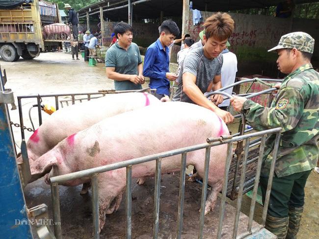 Giá heo hơi hôm nay 29/6: Dịch tả lợn châu Phi lan rộng, giá heo hơi tăng vượt 90.000 đồng/kg - Ảnh 1.