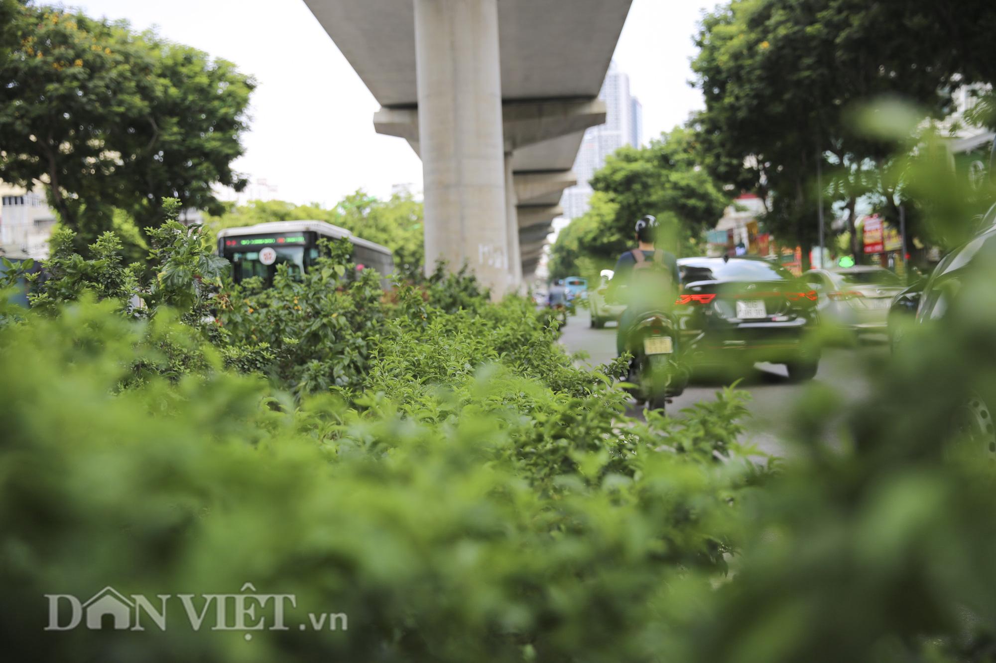 """Hệ thống cây xanh đã giúp Hà Nội giảm """"hiệu ứng đảo nhiệt đô thị"""" như thế nào? - Ảnh 10."""