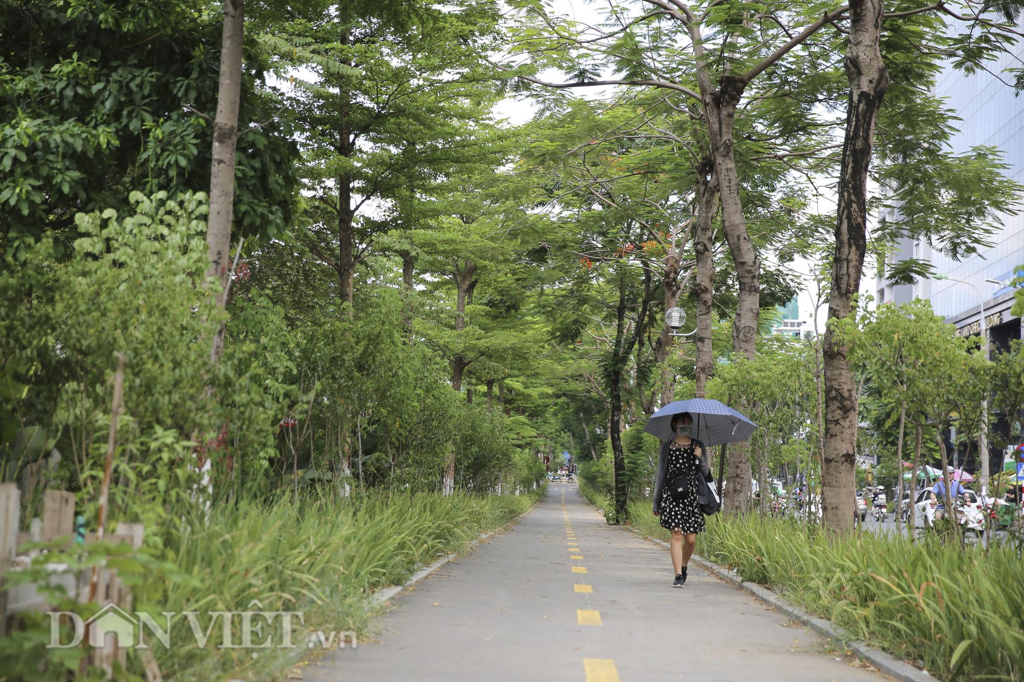 """Hệ thống cây xanh đã giúp Hà Nội giảm """"hiệu ứng đảo nhiệt đô thị"""" như thế nào? - Ảnh 12."""