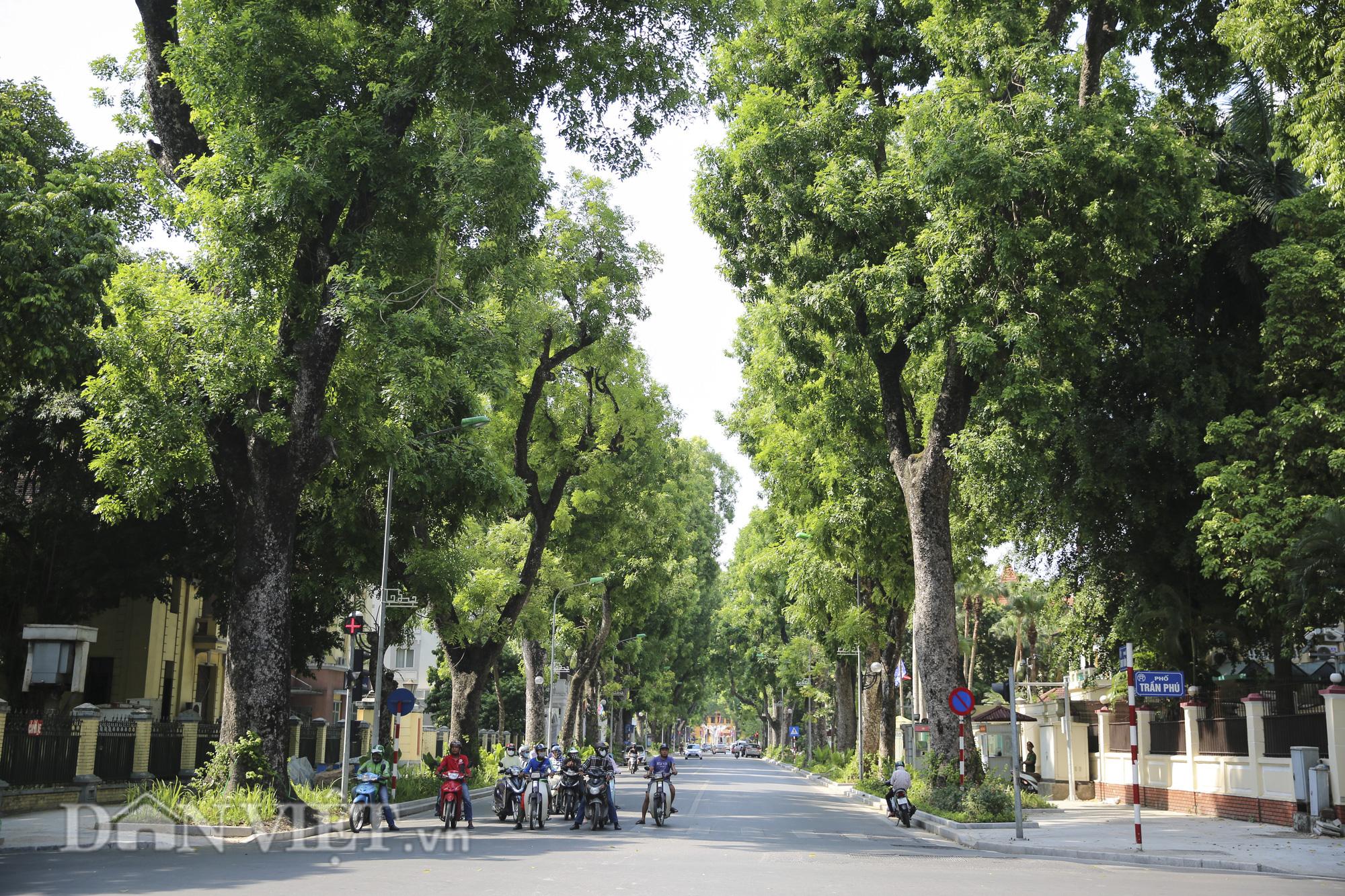 """Hệ thống cây xanh đã giúp Hà Nội giảm """"hiệu ứng đảo nhiệt đô thị"""" như thế nào? - Ảnh 6."""