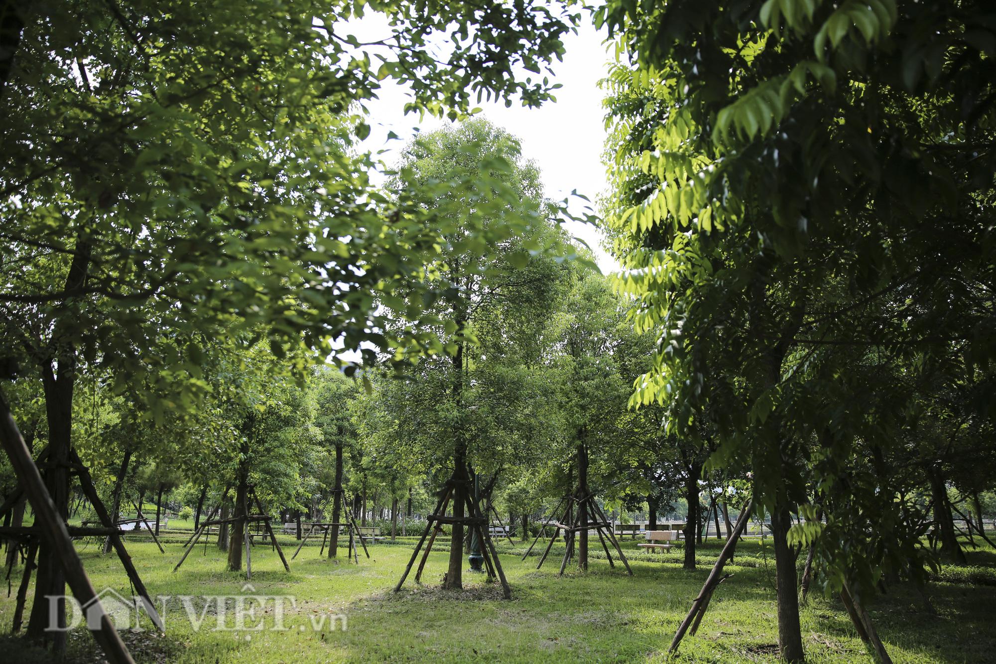 """Hệ thống cây xanh đã giúp Hà Nội giảm """"hiệu ứng đảo nhiệt đô thị"""" như thế nào? - Ảnh 7."""
