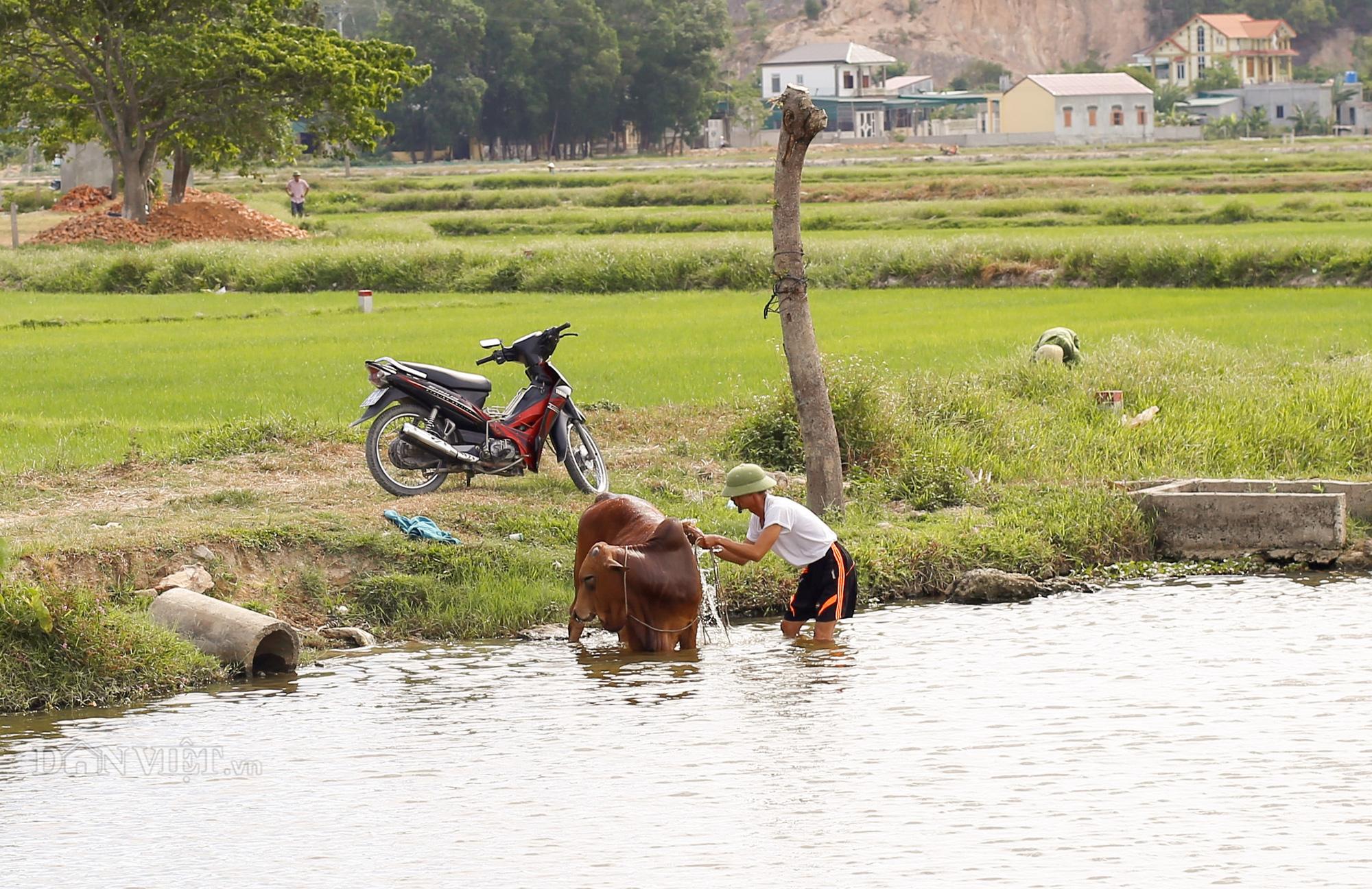 Nắng nóng khốc liệt, đất nứt toác, hoa màu héo khổ, nông dân Nghệ An gồng mình chống nóng - Ảnh 8.