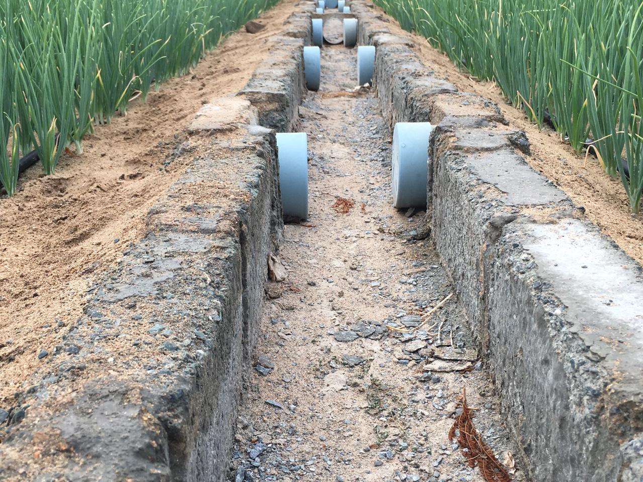 Ninh Thuận: Phó Chủ tịch Hội NDVN thăm mô hình trồng hành áp dụng công nghệ tưới nước nhỏ giọt - Ảnh 3.