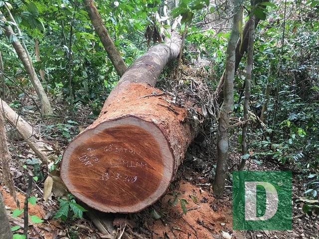 Yêu cầu xử lý nghiêm vụ phá rừng Trường Sơn - Ảnh 2.