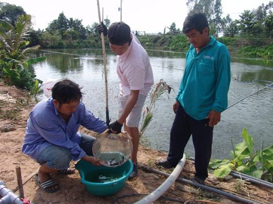 Long An: Sản lượng cá tra nuôi công nghiệp tăng đột biến - Ảnh 3.