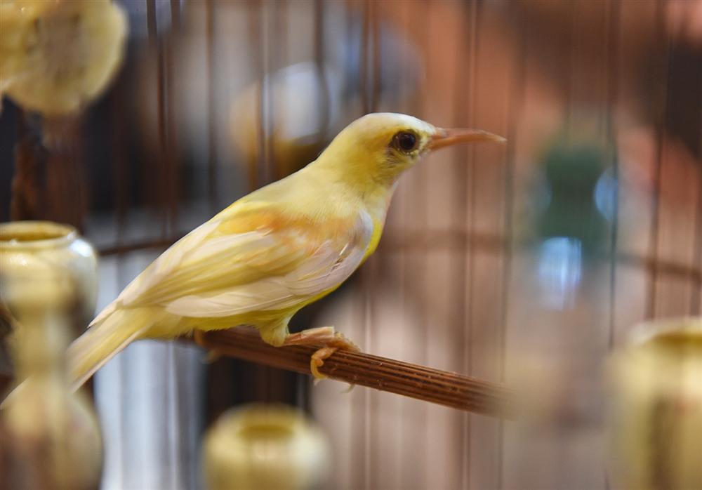 Bộ sưu tập chim giá tiền tỷ của vua chim màu Việt: Đắt đỏ, quý hiếm, đẳng cấp nhất Việt Nam - Ảnh 15.