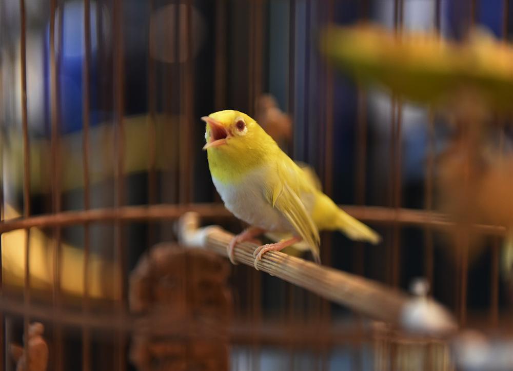 Bộ sưu tập chim giá tiền tỷ của vua chim màu Việt: Đắt đỏ, quý hiếm, đẳng cấp nhất Việt Nam - Ảnh 3.